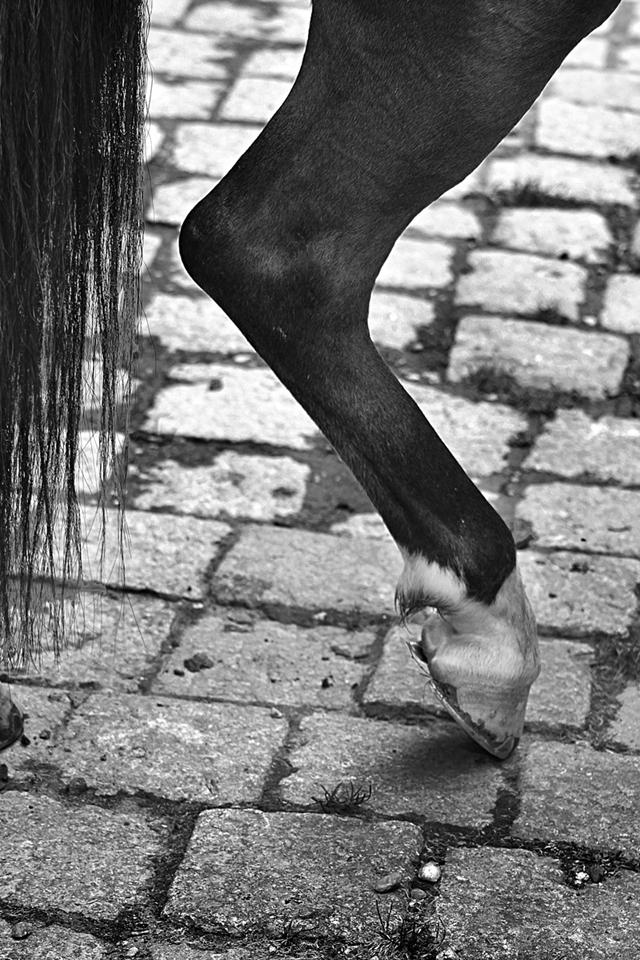 Ahmad ALI - Horse