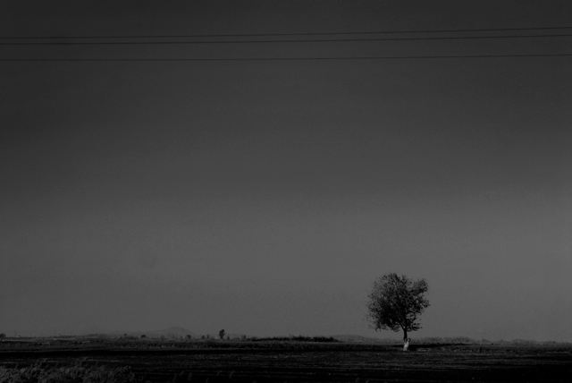 Ahmad ALI - Lonely tree 2
