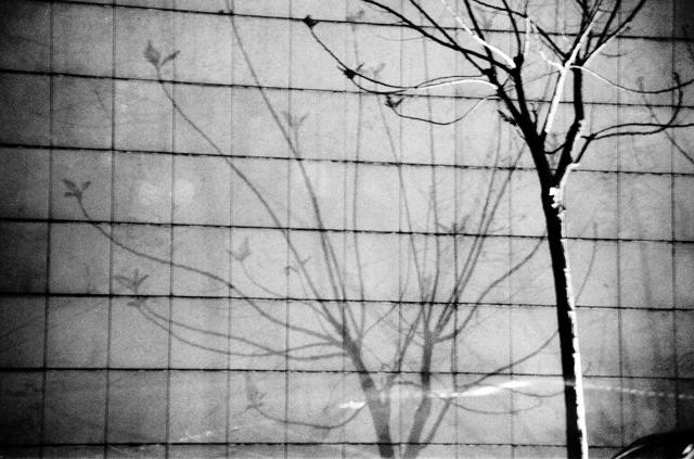 Ahmad ALI - Tree of shadow